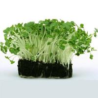 Набори для вирощування мікрозелені